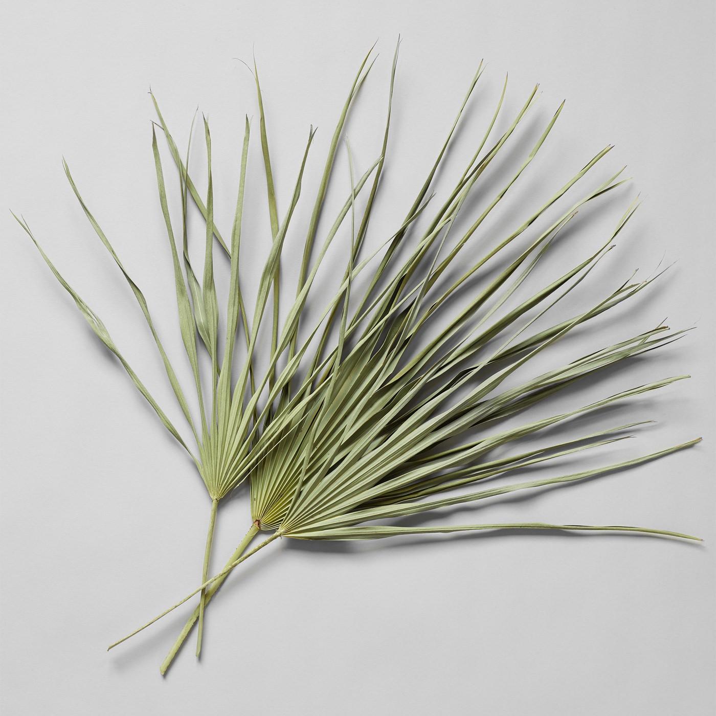 Bloomist Collections de Botanique Palmes