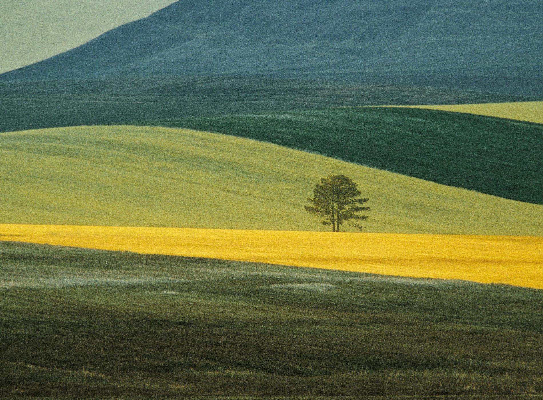Franco Fontana Photographie Paesaggio 1978