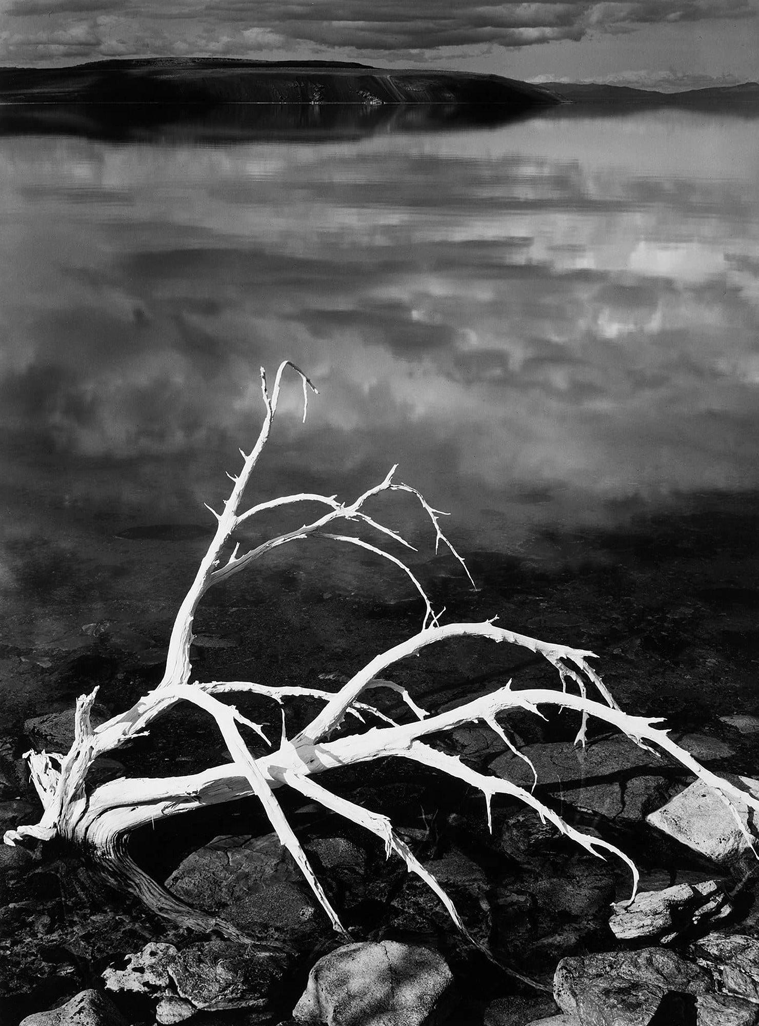 Ansel Adams White Branches Mono Lake California 1950v