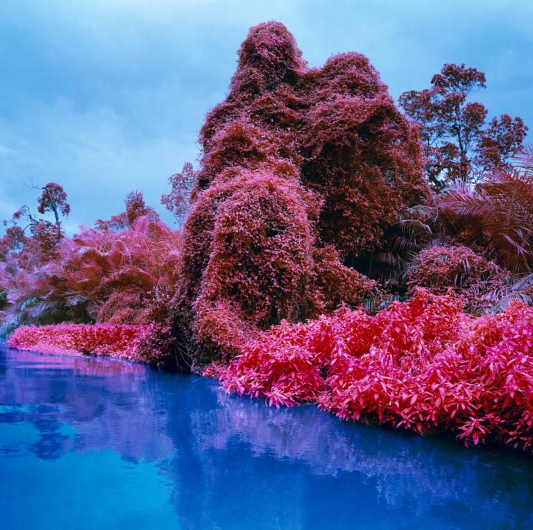 Richard Mosse Photographie Series Infra Kodak Aerochrome