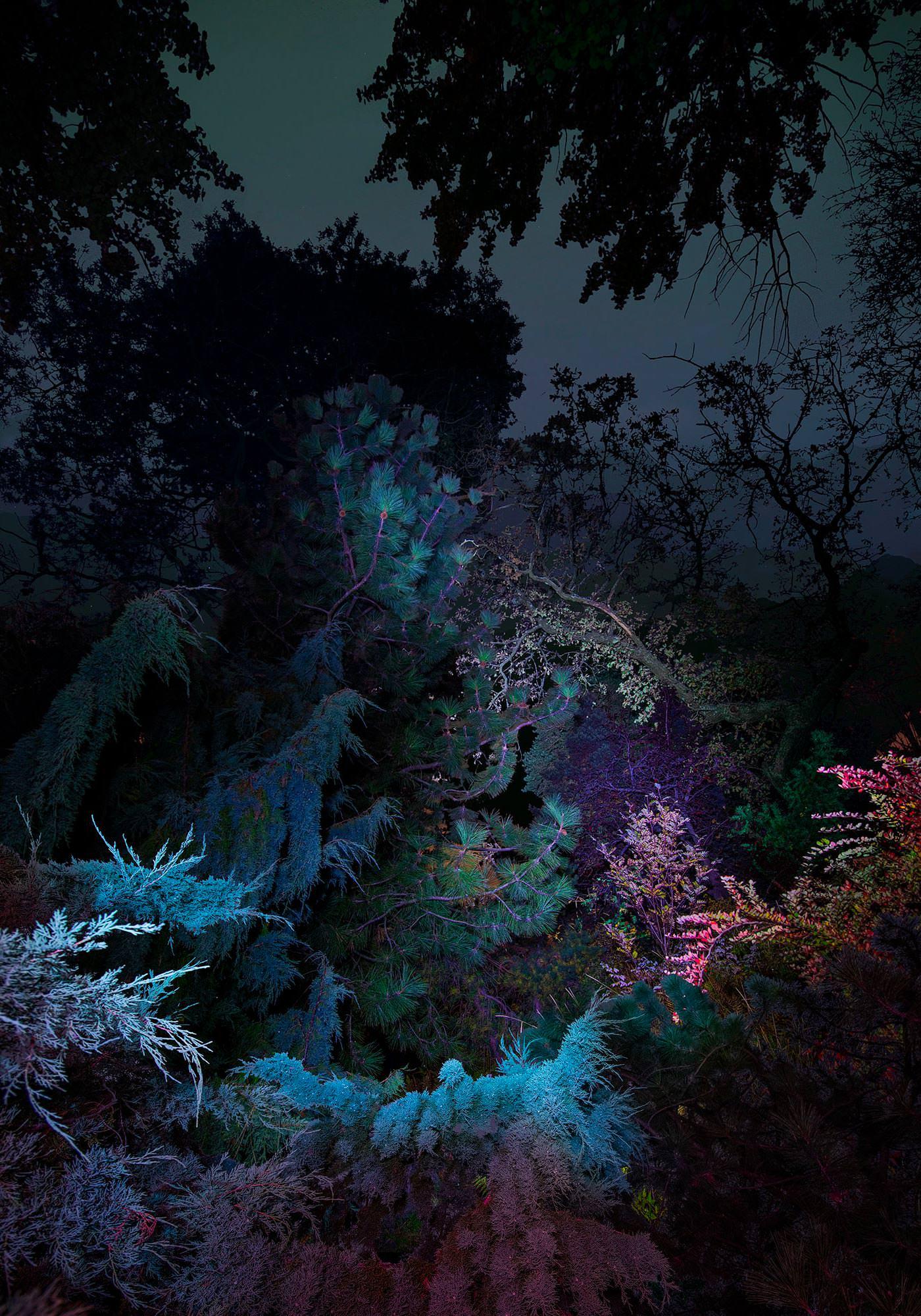 Linda Westin — Instagram @_cometalktome_ Photographie Surréaliste Dendrologie Portraits Bois